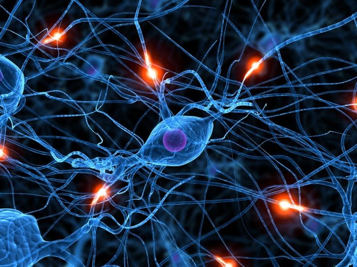 Neurons - Half of the human brain is devoted to vision.